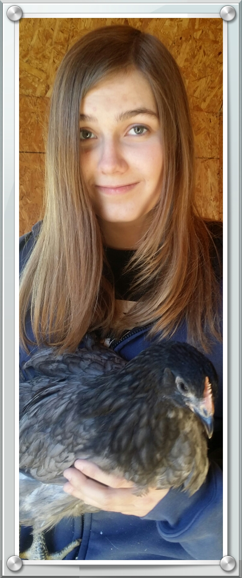 Our daughter with a nicely laced Blue Jersey Giant pullet.