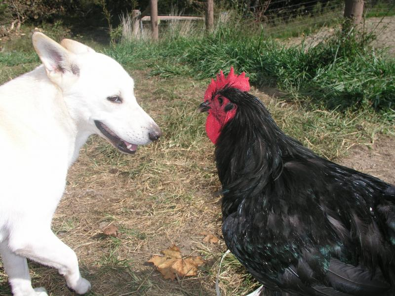 Blanca meets eye contact with a Jersey giant cock